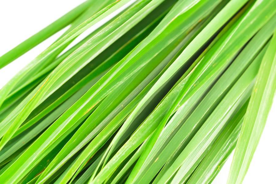 Lemongrass Ess Oil 2oz.