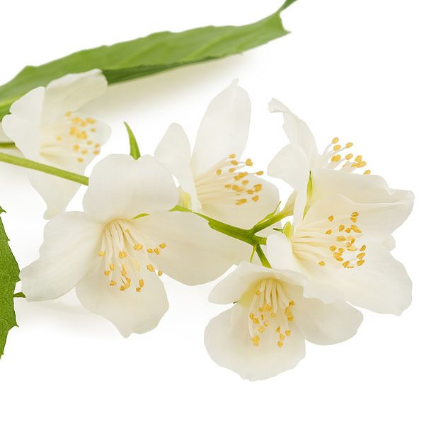 Neroli Ess Oil 1/8oz.