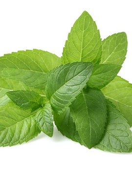 Peppermint Ess Oil 2oz.