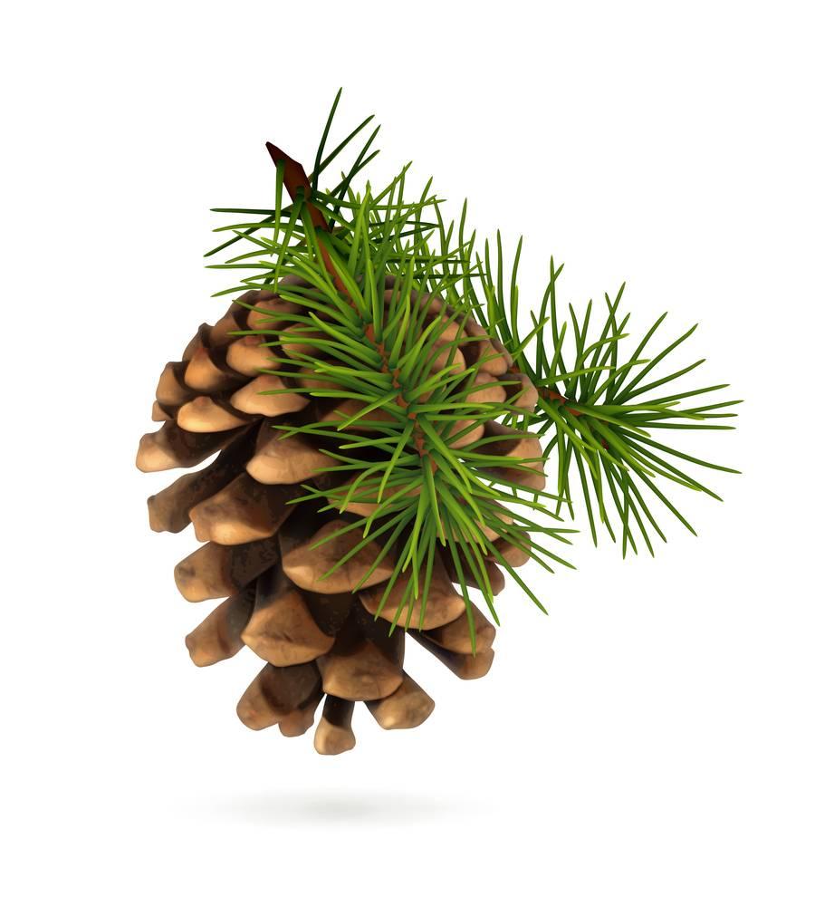 Pine Ess Oil 2oz.