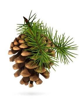 Pine Ess Oil 1/2oz.