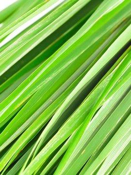 Lemongrass Ess Oil 1/2oz.