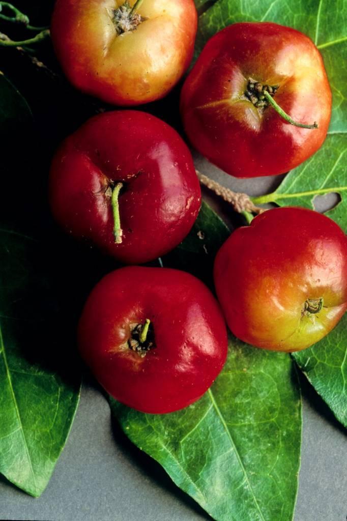 Acerola Berry Powder  2 oz