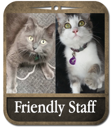 Friendly Staff at The Guild House