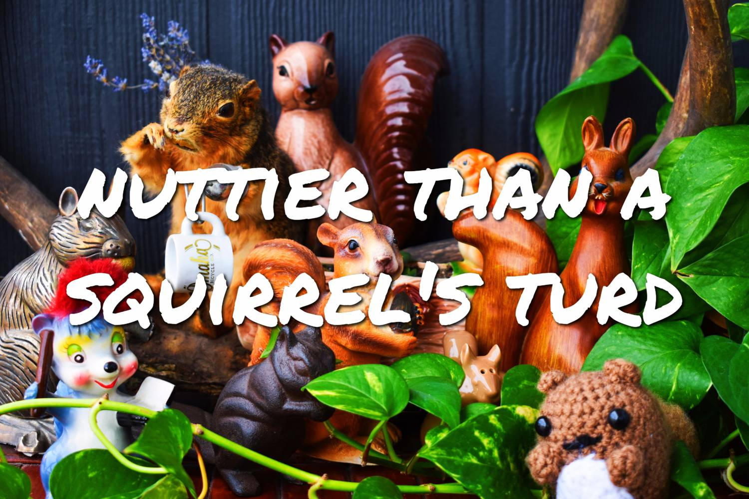 View OBC Squirrel Gear Now