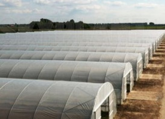 Greenhouse and Ground Covers