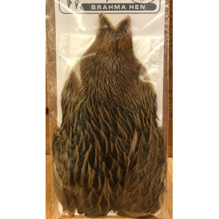 Whiting Whiting Brahma Hen Cape