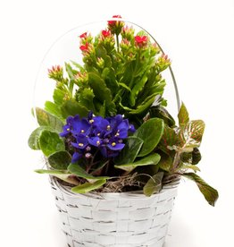 Blooming Plant Basket - Plus