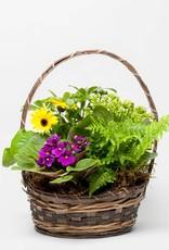 Blooming Plant Basket - Premium