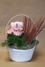 Blooming Plant Basket - It's A Girl