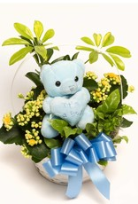 Blooming Plant Basket - It's A Boy