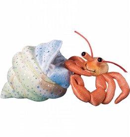 Douglas Henry Hermit Crab
