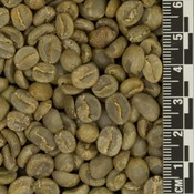 Raw Coffee Colombia El Aguila *