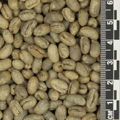 Papua New Guinea Peaberry *