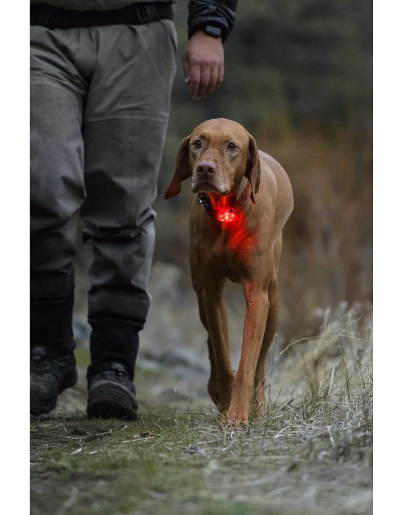 Ruffwear The Beacon™ Safety Light