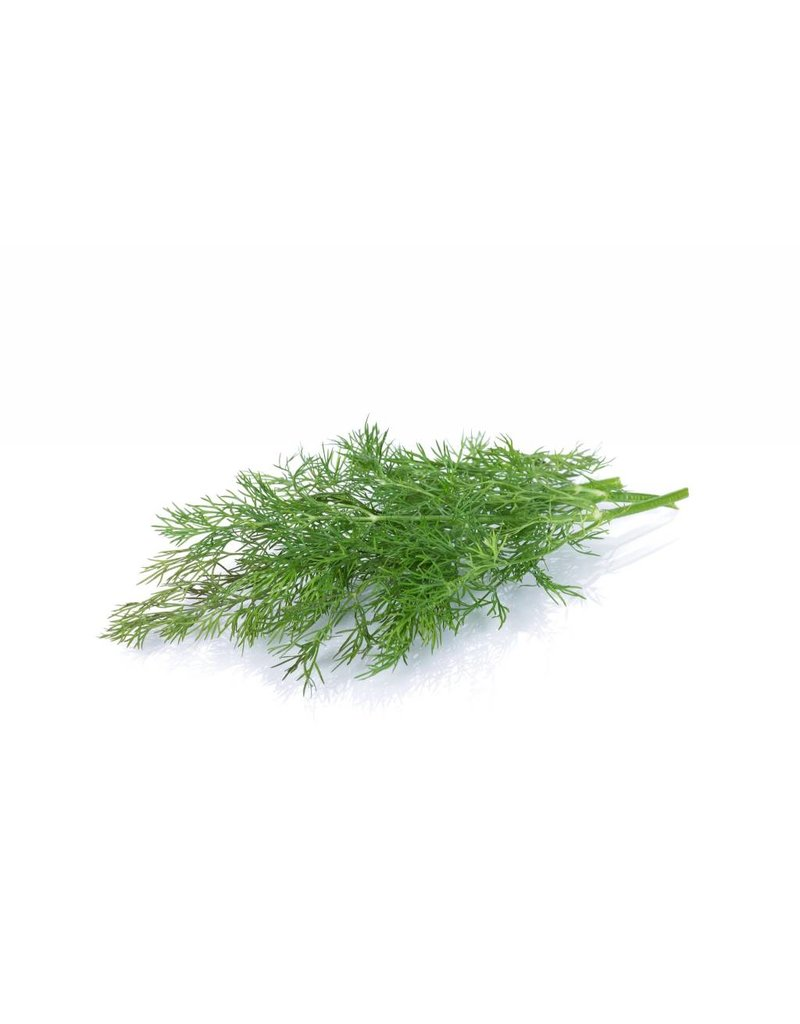The Anointed Olive Infused Olive Oil Wild Dill