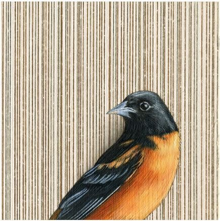 Print by Emily Uchytil - Baltimore Oriole