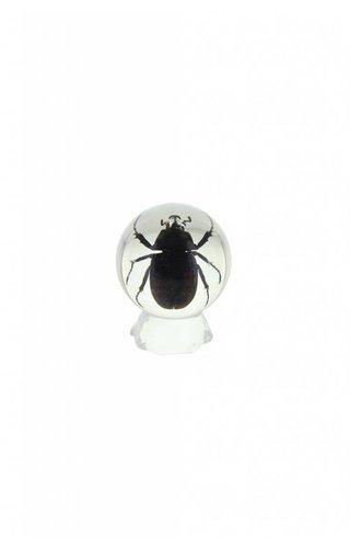 Unicorn Beetle Sphere