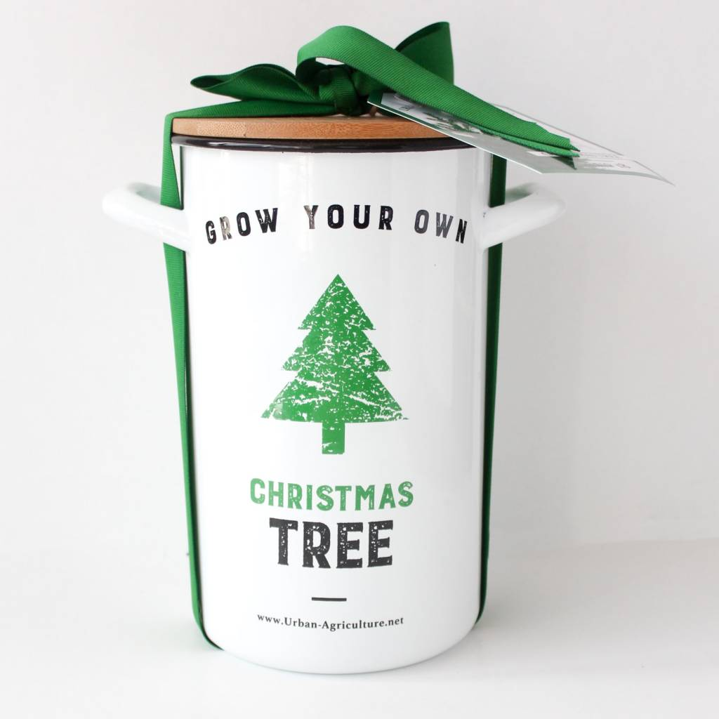 Grow Christmas Tree