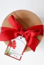 Red Amaryllis Bulb
