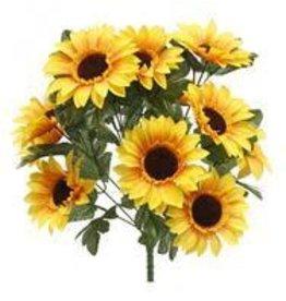 Sunflower Bush X14 Yellow