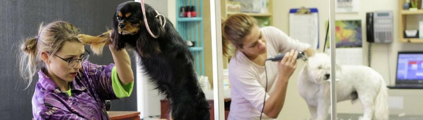 Professional Dog Cat Grooming Morris Plains Nj Terrys Pet Stop