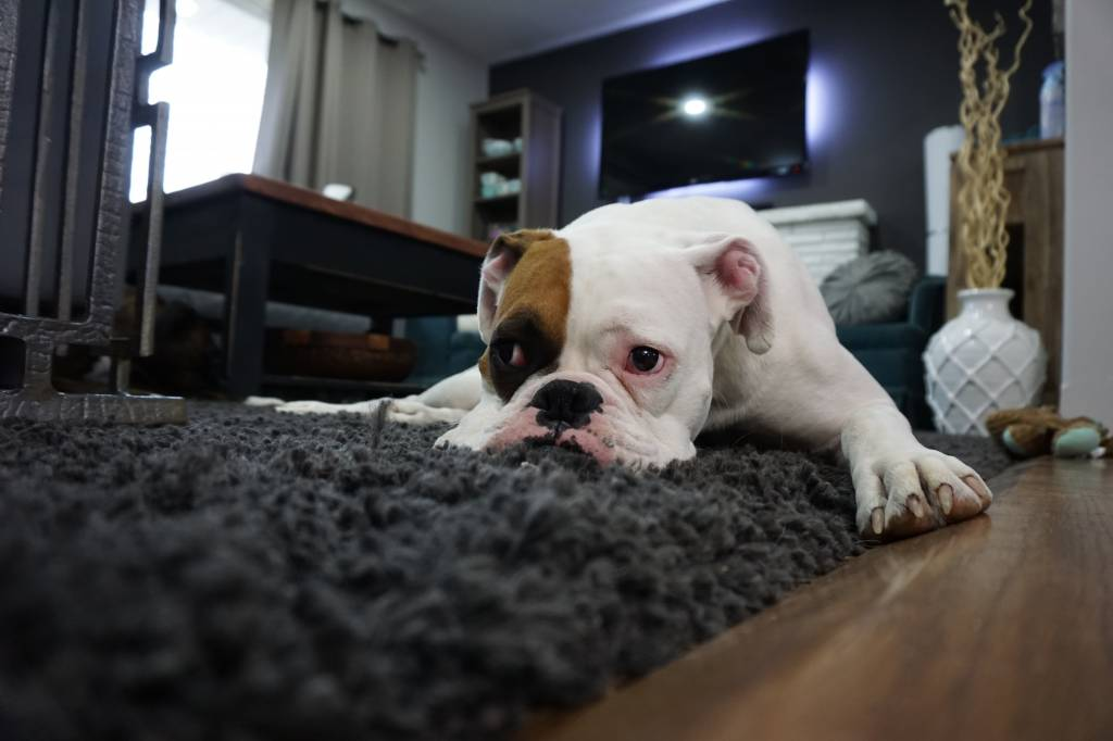 How to Help Your Dog Avoid Dry, Itchy Skin in the Winter