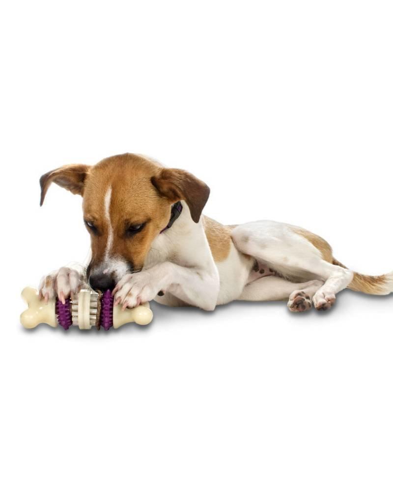 PETSAFE Busy Buddy Bristle Bone