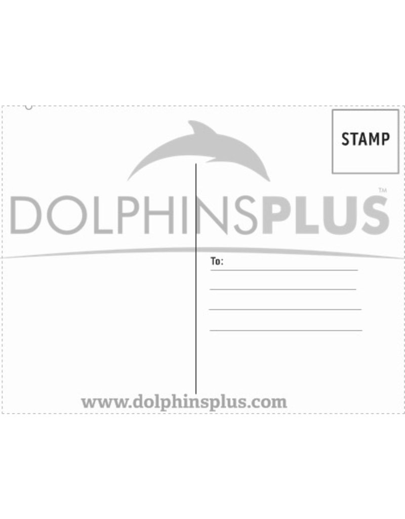 Souvenirs Dolphins Plus Sunset Postcard