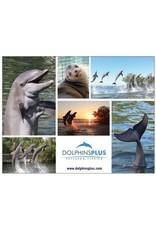 Souvenirs Dolphins Plus Postcard
