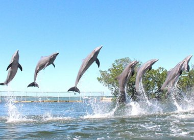 Shop our Dolphins