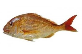 Tips to Catch More Snapper