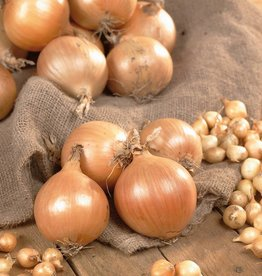 Onions Yellow Stuttgarter, 80 bulbs per bag