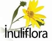inuliflora