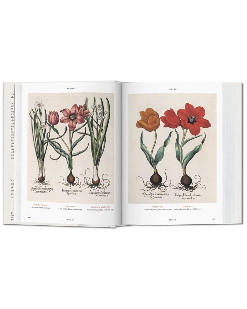 Basilius Besler's Florilegium: The Book of Plants