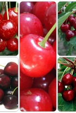 Cherry SD - 5 Way Combination Pre-Order