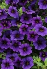 Calibrachoa 'Callie Dark Blue'- 4 inch