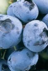 Blueberry 'Duke'- 1 gal