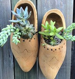 February 25th, Plant a Wooden Shoe from Holland