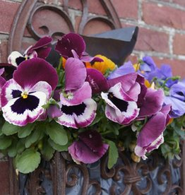March 4th, Create an Early Spring Wall Planter
