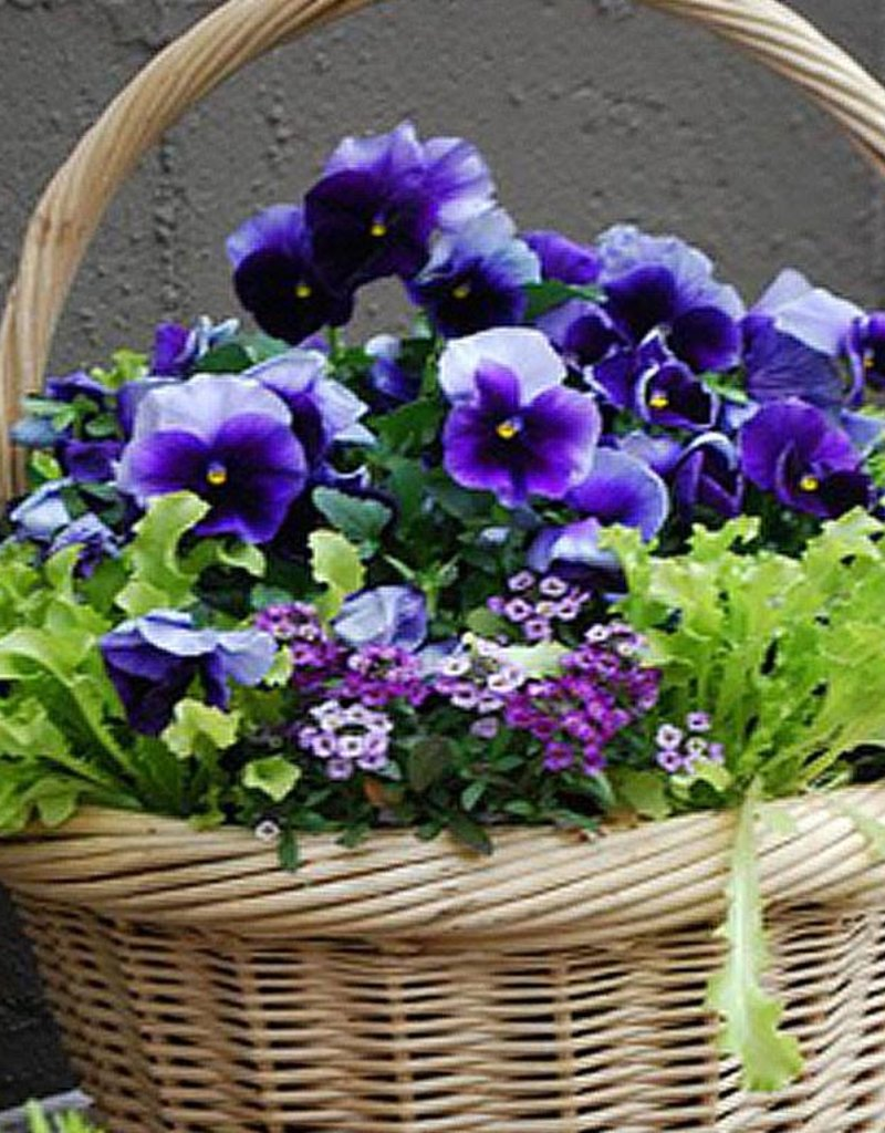 March 25th, Plant an Easter Basket