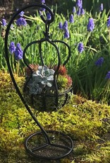 "April 1st, Create a ""World's Smallest"" Hanging Basket"