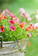 April 22nd, Plant a Bucket