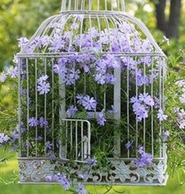 May 5th, Birdcage Planter for Mom!