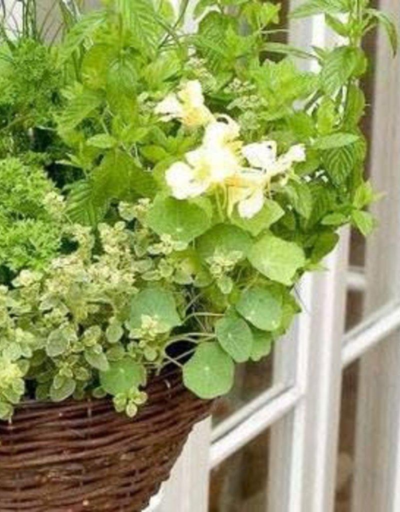 June 10th, Herb Pots