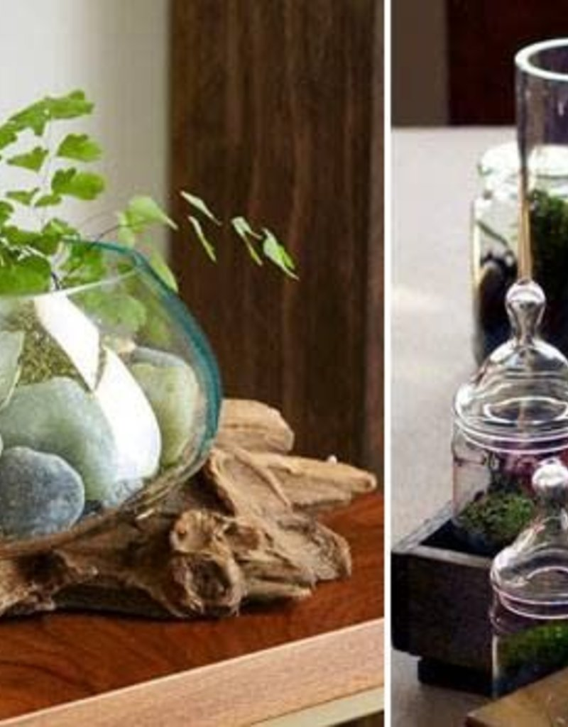 August 12th, Terrariums for your Home