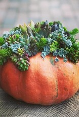 October 28th, Pumpkins and Succulents
