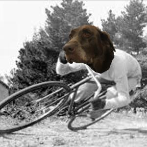 Ursa - Shop dog