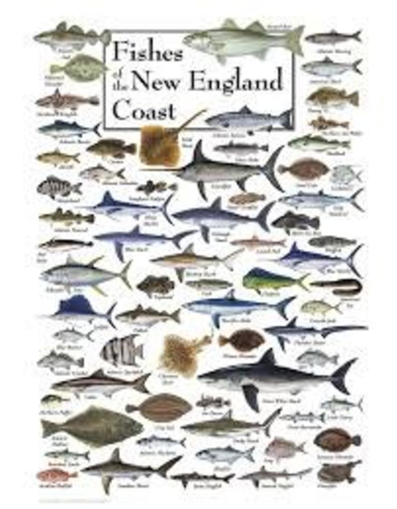 Earth Sky Water Fishes of the New England Coast