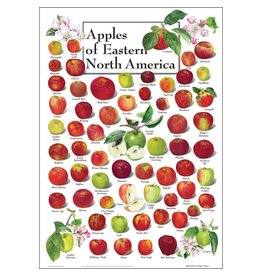 Steven M Lewers and Associates Apples of Eastern North America